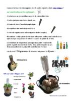 Comment-faire-pousser-des-champignons-solar-dripper