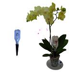 Orchi-Buddy ® le kit d'arrosage dédié aux orchidées