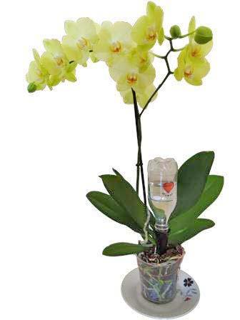 Une magnifique orchidée arrosée avec le goutteur solaire Solar-Dripper